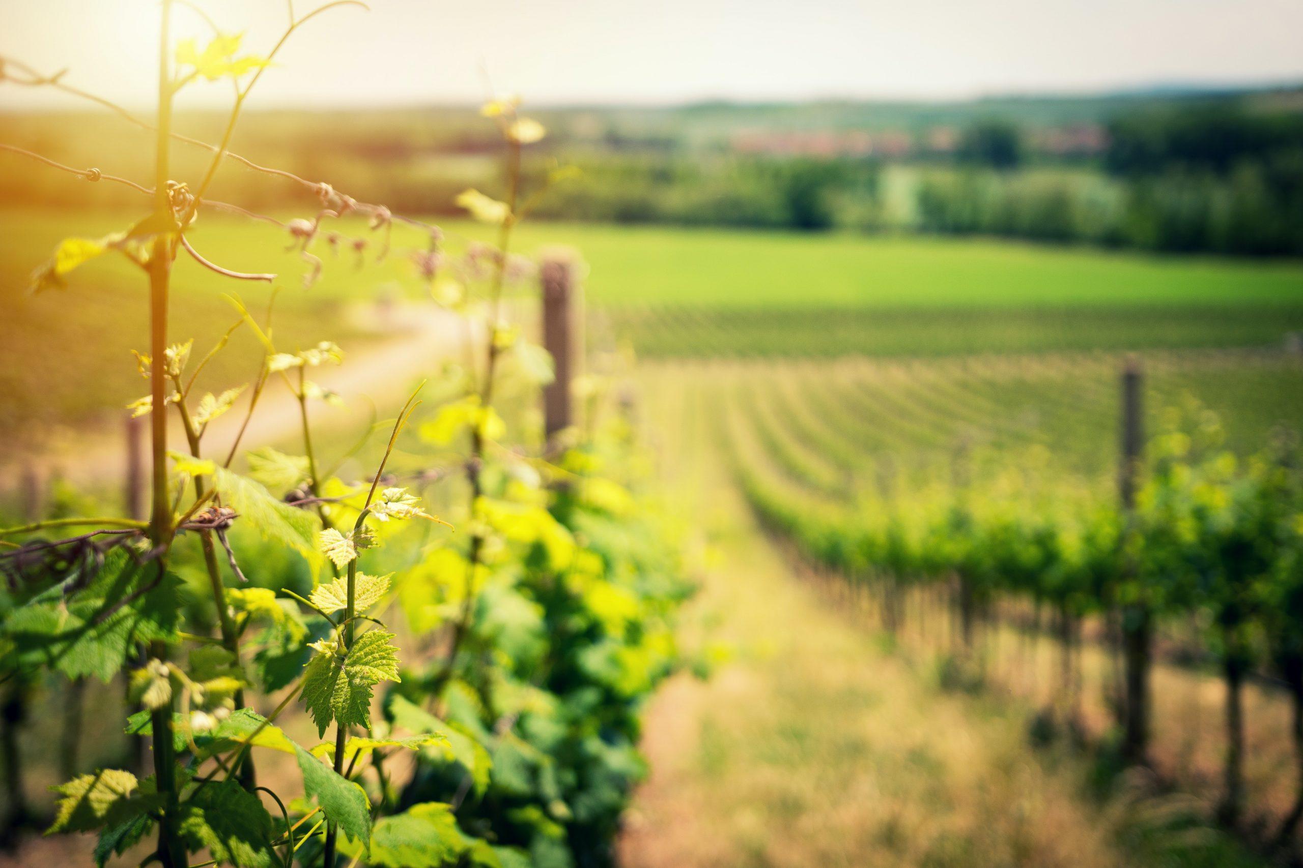 Déjanos ayudarte a agilizar la gestión de tu viñedo.